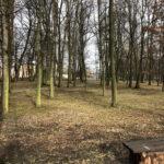 Park Miejski im. Małachowskich w Końskich - zdjęcie nr 12