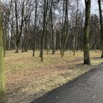Park Miejski im. Małachowskich w Końskich - zdjęcie nr 16