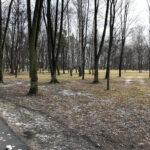 Park Miejski im. Małachowskich w Końskich - zdjęcie nr 25
