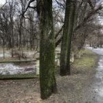 Park Miejski im. Małachowskich w Końskich - zdjęcie nr 30
