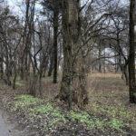 Park Miejski im. Małachowskich w Końskich - zdjęcie nr 33