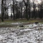 Park Miejski im. Małachowskich w Końskich - zdjęcie nr 37