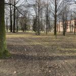 Park Miejski im. Małachowskich w Końskich - zdjęcie nr 38