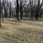 Park Miejski im. Małachowskich w Końskich - zdjęcie nr 44