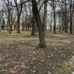 Park Miejski im. Małachowskich w Końskich - zdjęcie nr 46