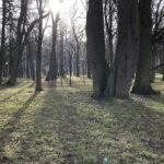 Park Miejski im. Małachowskich w Końskich - zdjęcie nr 52
