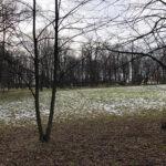 Park Miejski im. Małachowskich w Końskich - zdjęcie nr 54