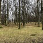 Park Miejski im. Małachowskich w Końskich - zdjęcie nr 8
