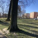 Konecki park - 16 marca 2020 roku - zdjęcie nr 1