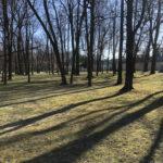 Konecki park - 16 marca 2020 roku - zdjęcie nr 20