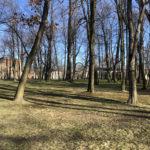 Konecki park - 16 marca 2020 roku - zdjęcie nr 22