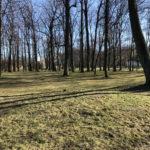 Konecki park - 16 marca 2020 roku - zdjęcie nr 23