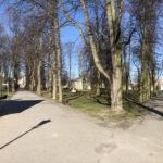 Konecki park - 16 marca 2020 roku - zdjęcie nr 35