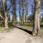 Konecki park - 16 marca 2020 roku - zdjęcie nr 36