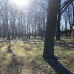 Konecki park - 16 marca 2020 roku - zdjęcie nr 46
