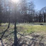 Konecki park - 16 marca 2020 roku - zdjęcie nr 56