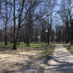 Konecki park - 16 marca 2020 roku - zdjęcie nr 57