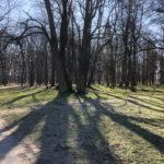 Konecki park - 16 marca 2020 roku - zdjęcie nr 58