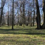 Konecki park - 16 marca 2020 roku - zdjęcie nr 59