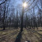 Konecki park - 16 marca 2020 roku - zdjęcie nr 62