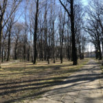 Konecki park - 16 marca 2020 roku - zdjęcie nr 63