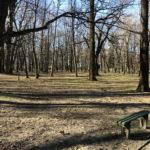 Konecki park - 16 marca 2020 roku - zdjęcie nr 66