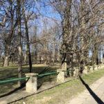 Konecki park - 16 marca 2020 roku - zdjęcie nr 67