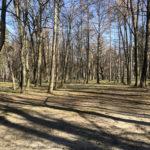 Konecki park - 16 marca 2020 roku - zdjęcie nr 71