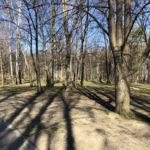 Konecki park - 16 marca 2020 roku - zdjęcie nr 72