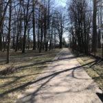 Konecki park - 16 marca 2020 roku - zdjęcie nr 73