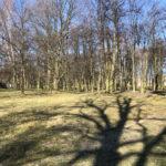 Konecki park - 16 marca 2020 roku - zdjęcie nr 76