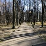 Konecki park - 16 marca 2020 roku - zdjęcie nr 79