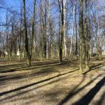 Konecki park - 16 marca 2020 roku - zdjęcie nr 80