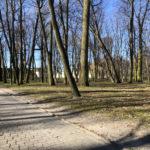 Konecki park - 16 marca 2020 roku - zdjęcie nr 81