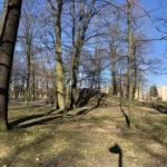 Konecki park - 16 marca 2020 roku - zdjęcie nr 83
