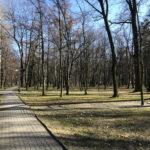 Konecki park - 16 marca 2020 roku - zdjęcie nr 84