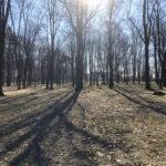 Konecki park - 16 marca 2020 roku - zdjęcie nr 85