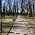 Konecki park - 16 marca 2020 roku - zdjęcie nr 86
