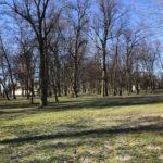 Konecki park - 16 marca 2020 roku - zdjęcie nr 87