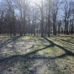 Konecki park - 16 marca 2020 roku - zdjęcie nr 89