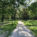 Konecki park - maj 2020 zdjęcie nr 1