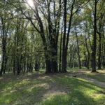 Konecki park - maj 2020 zdjęcie nr 12
