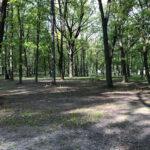 Konecki park - maj 2020 zdjęcie nr 15
