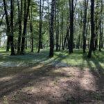 Konecki park - maj 2020 zdjęcie nr 18