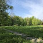 Konecki park - maj 2020 zdjęcie nr 2