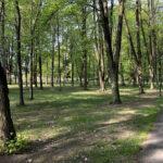 Konecki park - maj 2020 zdjęcie nr 23