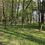 Konecki park - maj 2020 zdjęcie nr 25