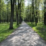 Konecki park - maj 2020 zdjęcie nr 26