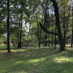 Konecki park - maj 2020 zdjęcie nr 3
