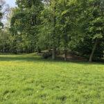 Konecki park - maj 2020 zdjęcie nr 42